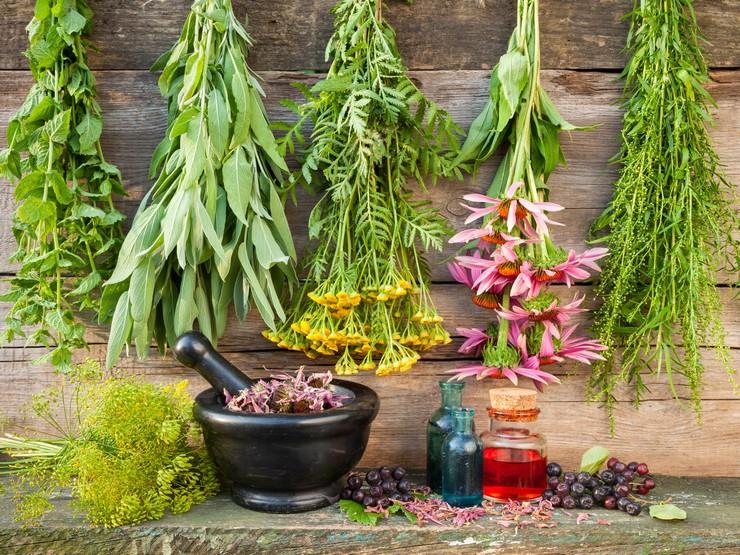 Эффективные травы для борьбы с жирной и сухой перхотью